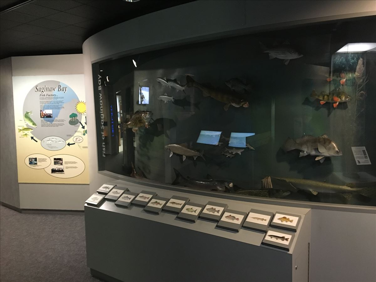 Exhibits, Saginaw Bay Visitor Center