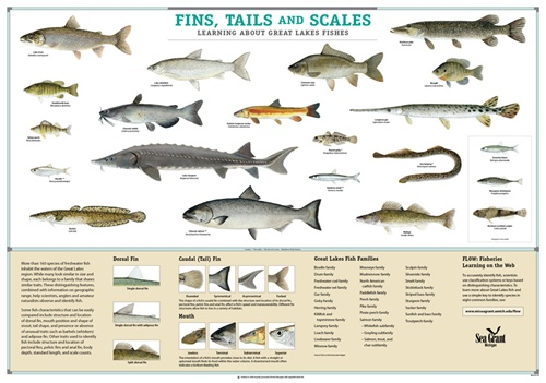 Great Lakes Fish